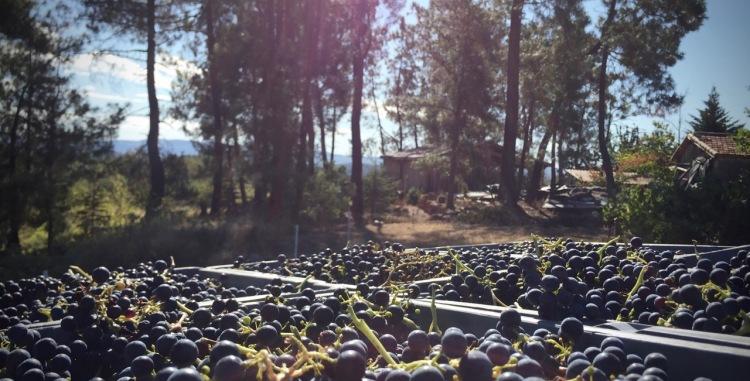 Les Bois Perdus, vignerons naturels en Ardèche